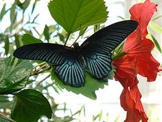 Sertoma Butterfly House takes about an hour to explore, and includes an extensive collection of sea animals and corals in addition to butterflies.