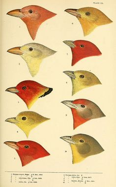 A History of North American birds Boston :Little, Brown,1905 - Biodiversity Heritage Library