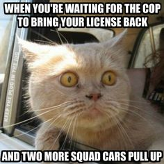 Funny cats and kittens, cat humour. For the funniest cats photos as well as quotes see www. Funny Cat Photos, Funny Animal Pictures, Funny Animals, Cute Animals, Meme Pics, Funniest Animals, Funny Horses, Happy Animals, Funny Shit
