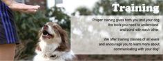 Training services benefit your pet!