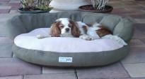 "Win a memory foam Pet Bed photo contest! Vote for my puppy ""Kratos the Bed Hog."""