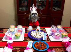 La dulce Amelia, Cafeta Fan consumada, disfrutando y compartiendo La Cafeta Canina.  :)