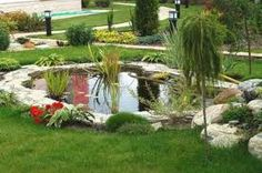 Tropical yard pond