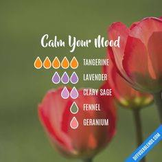Calm Your Mood - Essential Oil Diffuser Blend