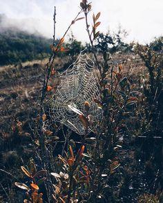 ¿Listo para un fin de semana de terror? ¿Tienes ya algún plan para celebrar Halloween? Esta imagen de @roger_bv es una de las seleccionadas en nuestro #hallazgosemanal, junto a las de @luisarizamx y @alupejuguetes. Cada viernes te mostramos imágenes publicadas a lo largo de la semana por sorprendentes voces de la comunidad de habla hispana. ¡Felicidades a los seleccionados! Participa con tus fotos utilizando el hashtag #hallazgosemanal. #naturaleza #otoño Foto de @roger_bv