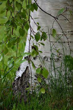 Happy Summer, Summer Of Love, Summer Time, Norwegian Wood, Summer Feeling, Summer Photos, Source Of Inspiration, Natural Wonders, Nature Photos