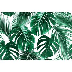 Macbook Air Discover Bannan Removable Tropical Palm Leaves L x W Peel and Stick Wallpaper Roll Bay Isle Home Bannan Removable Tropical Palm Leaves L x W Peel and Stick Wallpaper Roll Jungle Wallpaper, Palm Leaf Wallpaper, Tree Wallpaper, Nature Wallpaper, Wallpaper Roll, Peel And Stick Wallpaper, Wallpaper Backgrounds, Wallpaper Murals, Tropical Wallpaper