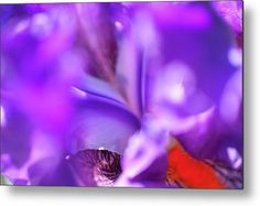 Abstract Macro Of Iris Local Color Metal Print by Jenny Rainbow. All metal prints are professionally printed, packaged, and shipped within 3 - 4 business days and delivered ready-to-hang on your wall. Choose from multiple sizes and mounting options. Art Prints For Home, Fine Art Prints, Local Color, Got Print, High Gloss, Fine Art Photography, Offset, Iris, Class Ring