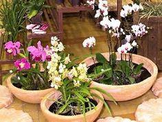 Orquídeas-como-cuidar-plantar Mais Above Ground Garden, Container Gardening, Gardening Tips, Orchid Terrarium, Lucky Plant, Growing Orchids, Happy Flowers, Orchid Care, Ficus