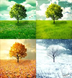 Featuring: Quote: Each new season grows from the leftovers from the past. That is the essence of change and change is the basic law. About: The Four Seasons (Italian: Le quattro stagioni) is a set ...