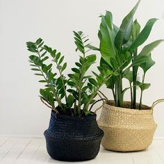 """83 Likes, 3 Comments - For Keeps Store (@for_keeps_store) on Instagram: """"I am obsessed with seagrass baskets. Obsessed! How good to they look housing indoor greens? Who…"""""""