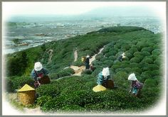 "Tea Pickers on Hill of Green  By T. ENAMI ca.1910-15. Hand-colored glass slide. Go Figure. When looking at this image, (very SMALL images) that are simply ""painted over"" with transparent water color. The results continue to amaze even after 100 years. www.t-enami.org"