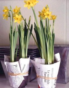 love the daffodils wrapped in paper... maybe music sheets