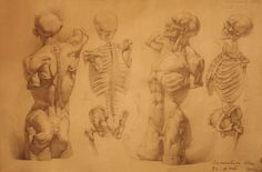 human anatomy 22 by ivany86 on deviantART via PinCG.com