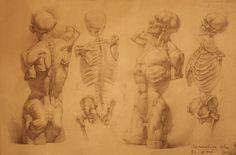 http://ivany86.deviantart.com/art/human-anatomy-22-189007601