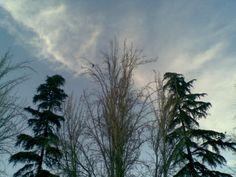 altos árboles en el cielo
