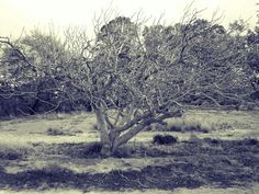 Fruit Tree 1 canvas print