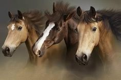 3 horses cross stitch pattern