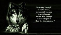 Wolf wisdom.