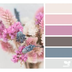design seeds | for all who ♥ color ❤ liked on Polyvore featuring color