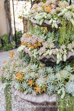Succulent Fountain in Jeanne Meadow's Garden - www.succulentsandsunshine.com