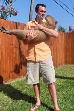 Britty wants a Capybara