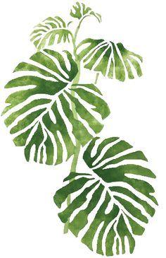 ❧ Couleur : Vert et blanc ❧