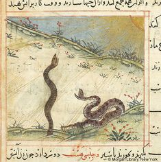 Bestiary, MS M.500 fol. 73v - Images from Medieval and Renaissance Manuscripts - The Morgan Library & Museum