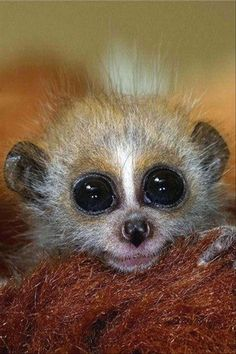Cute LOL Funny Animals kids (07:40:05 PM, Friday 10, April 2015 PDT) – 19 pics