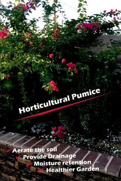 Horticultural pumice is safe to use in all types of garden plants. Include in your potting mix to provide a high level of moisture retention, drainage and soil aeration.