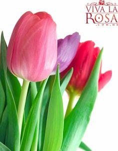 Hermosos tulipanes!