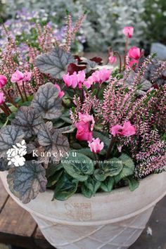 Kanekyu 金久: 冬のコンテナガーデン!【寄せ植え】 part 2 ... Container Flowers, Container Plants, Container Gardening, Pots, Hanging Baskets, Winter Garden, Horticulture, Flower Arrangements, Backyard