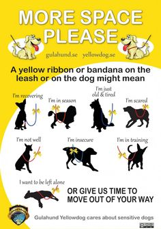 The Yellow Ribbon – Good Idea or Not?!
