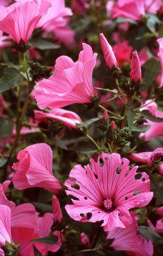 2012 elokuu Pancolar Electric 022 Flowers, Plants, Plant, Royal Icing Flowers, Flower, Florals, Floral, Planets, Blossoms