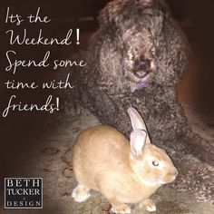 Friday quote - weekend quote - Poodles - bunnies - inspiration - friends