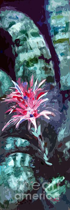 #Bromeliad #Abstract #Art #Tropical #Flowers