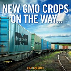 Though many whole foods are currently not genetically modified, the biotech industry is constantly running field trials on new GMO varieties. Learn more from Center for Food Safety: http://www.centerforfoodsafety.org/issues/311/ge-foods/crops-in-the-pipeline #GMOs #food #LabelGMOs #RightToKnow