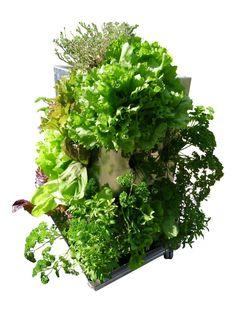 KUBI Hochbeet aus Edelstahl mit integriertem Wasserspeicher und Komposter. 10 Jahre Erfahrung! Der KUBI ist ein perfekt abgestimmtes Anbausystem aus Erdvolumen, Bewässerung und Kompostierung. Platz für 51 Pflanzen in größtmöglicher Vielfalt, und das raumsparend auf nur 1m². Auch für Anfänger geeignet. #KUBI #vertikalesgärtnern #urbangardening #vertical #hochbeet #edelstahl #rollen #kompost #wasser #garten #terrasse #balkon #pflanzsäule #platzsparend