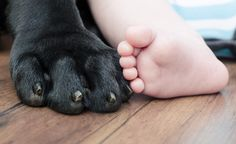 5 Tips to Prepare a Dog for a Baby...my dog will need this once we have our first baby