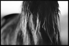 Roberto Dutesco - The Wild Horses of Sable Island