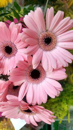 A World of Flowers for You Exotic Flowers, Amazing Flowers, Pink Flowers, Flowers For You, Pretty Flowers, Flower Images, Flower Art, Margarita Rosada, Pink Gerbera