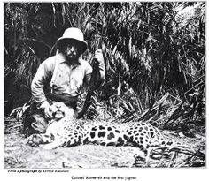 Almanac of Theodore Roosevelt - Roosevelt Rondon Expedition To Brazil 1913-1914  The first jaguar