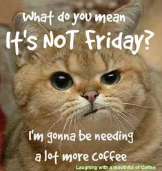 4 Thankful Simple Ideas: But First Coffee Hot Chocolate coffee filter website.Rhubarb Coffee Cake coffee date pink.Cup Of Coffee Ilustration. Thursday Humor, Thursday Quotes, Its Friday Quotes, Friday Memes, Funny Good Morning Quotes, Morning Humor, Coffee Is Life, I Love Coffee, Coffee Girl
