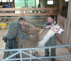Image result for llama shearing Shearing, Image