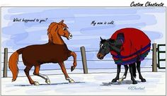 What happened to you? My mom is cold. LOL. Remember, horses don't get as cold as we do! No need to OVER blanket if your horse has a nice winter coat! But keep an eye on them during this cold snap;)