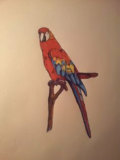 Parrot. Promarker and black pen. Little drawing.