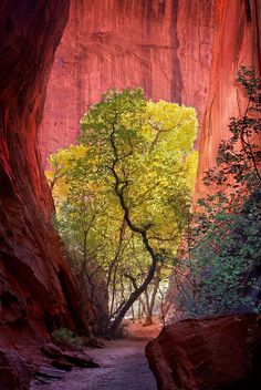 Slot Canyon / Escalante National Park, UT
