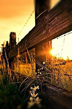 Sunset behind a barbed wire rustic fence... Hues of brown & yellow