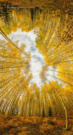 Mind Warp by David Kingham a warped Kebler Pass in autumn, Crested Butte, Colorado