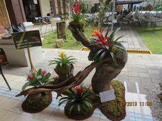 BIENVENIDOS AL SITIO OFICIAL COMHDE display de bromelias , Costa Rica
